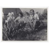Czesław Kleban z żoną Ireną i córką Martą w swoim ogrodzie przy ulicy Okrężnej, Sopot 1954 r.