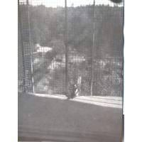 Dzięcioły na balkonie, Sopot 1969 r