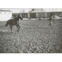 Wojciech Kowerski łapie konia.  W tle garaże i kuźnia, Sopot 1975 r.