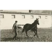Wojciech Kowerski lonżuje konia, Sopot lata 50. XX w.